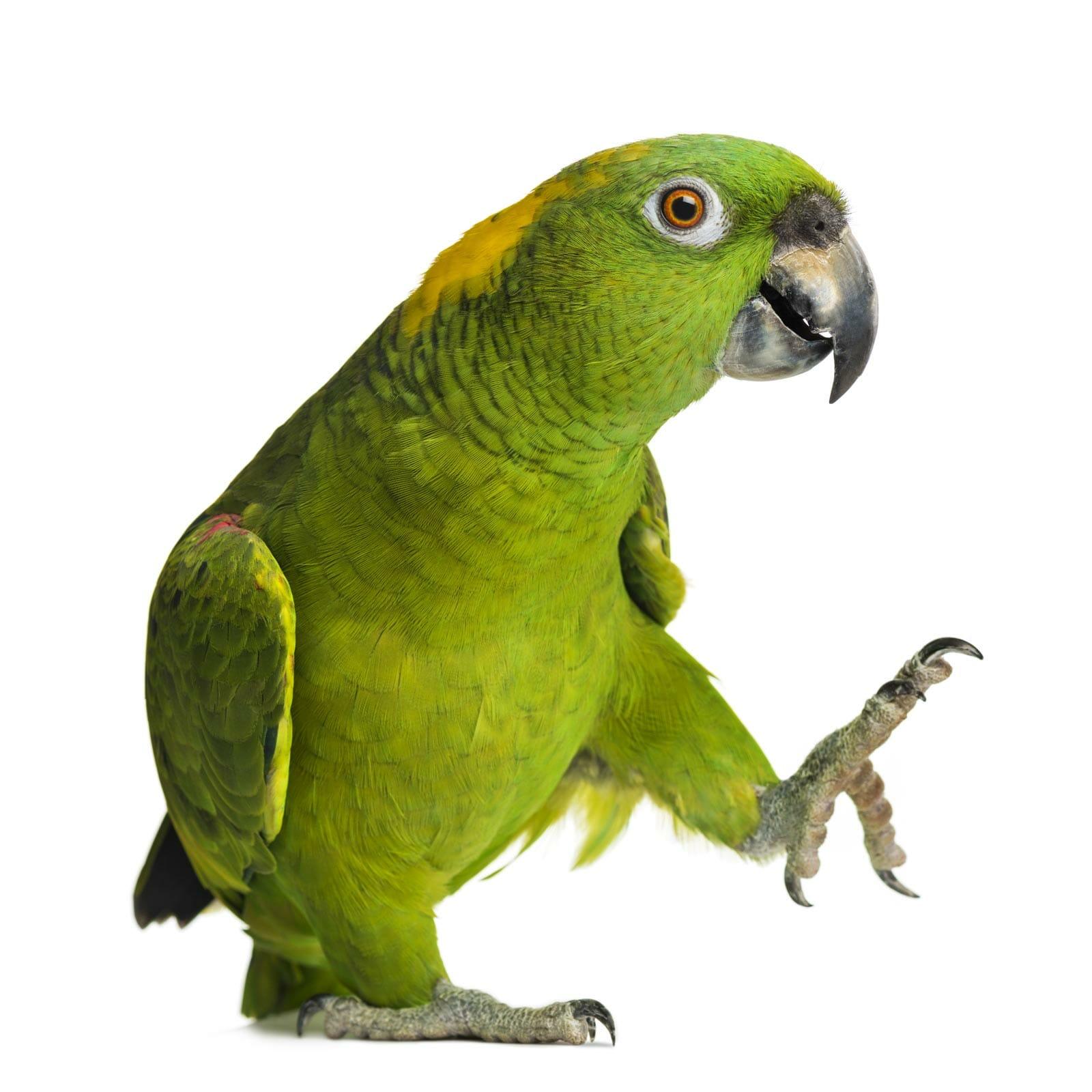 bird pet supplies food parrot