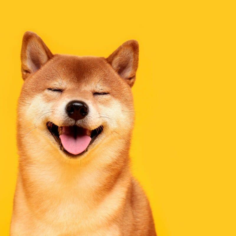 dog supplies online shop food