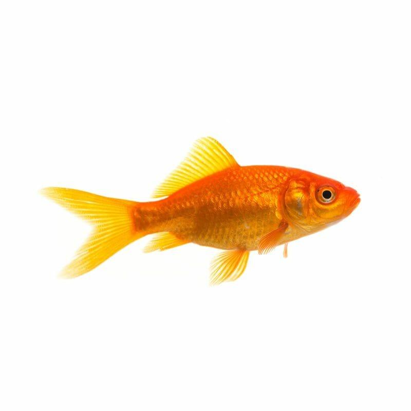 fish pet supplies food freshwater