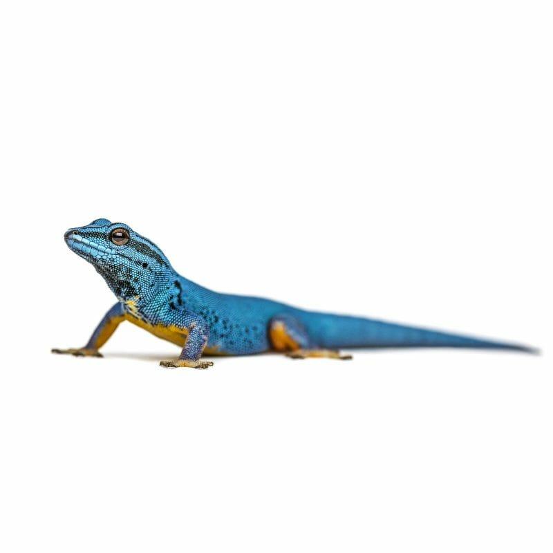 reptile pet supply lizard food