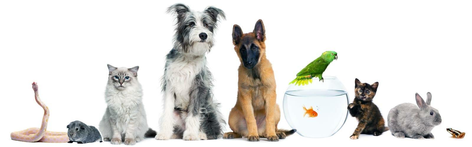 pet supplies dogs cats birds fish